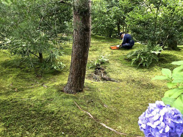 Giardini giapponesi quel che nelle foto di solito non for Giardini giapponesi