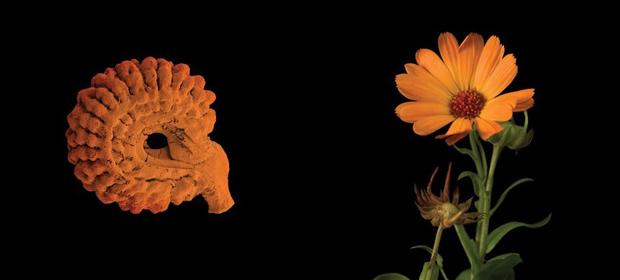 Home_Intelligenza_delle_piante-02