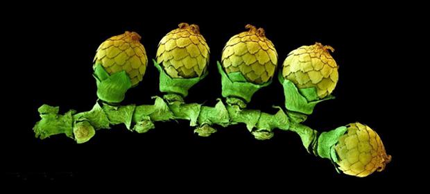 Home_Intelligenza_delle_piante-03