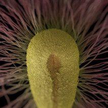 Intelligenza_delle_piante