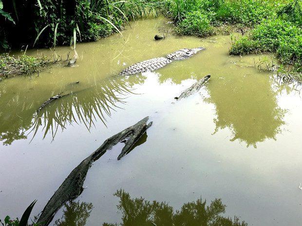 bayou Louisiana 2