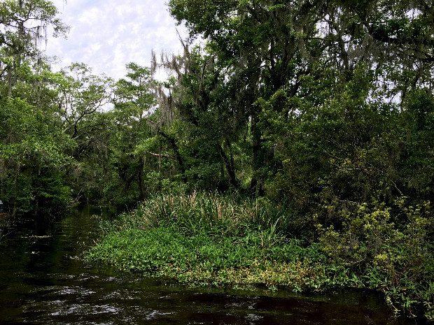 bayou louisiana 3