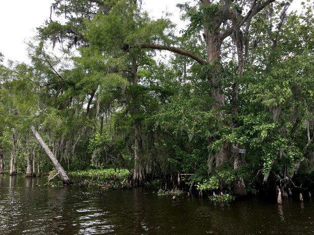 bayou louisiana 4