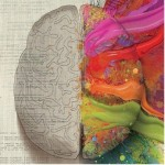 Right brain vs. left brain creativity test