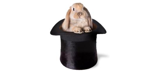 Risultati immagini per coniglio dal cappello