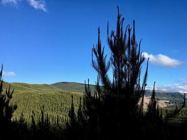 NELLA REDWOOD FOREST, ROTORUA