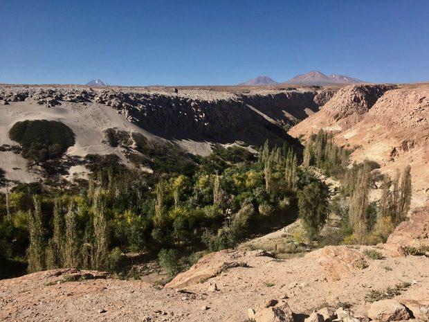 Deserto di Atacama, oasi